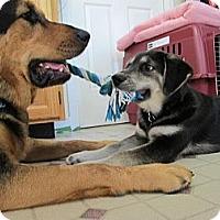 Adopt A Pet :: Lola - Surrey, BC