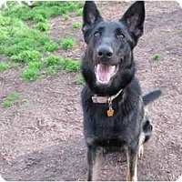 Adopt A Pet :: Sasha - Green Cove Springs, FL