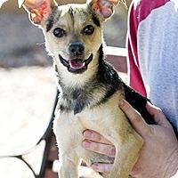 Adopt A Pet :: Sneaker - Only $25 adoption! - Litchfield Park, AZ