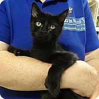 Adopt A Pet :: SEBASTIAN - Diamond Bar, CA