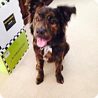 Adopt A Pet :: Cooper - Manhasset, NY