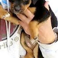 Adopt A Pet :: Basil-ADOPTION PENDING - Boulder, CO