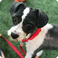 Adopt A Pet :: Drake - Ft. Lauderdale, FL
