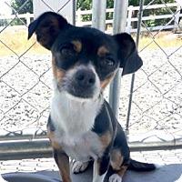 Adopt A Pet :: Petunia - Yucaipa, CA
