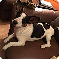 Adopt A Pet :: Trouble - Brattleboro, VT