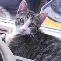 Adopt A Pet :: Jaina - Whiting, IN