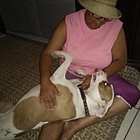 Adopt A Pet :: Mia-California - Fulton, MO