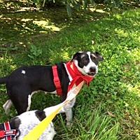 Adopt A Pet :: Dharma - Rexford, NY