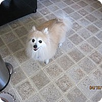 Adopt A Pet :: Kaylee - Mt Gretna, PA