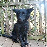 Adopt A Pet :: Tallulah - Eden, NC