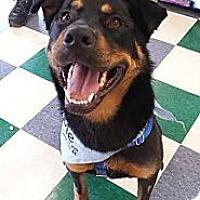 Adopt A Pet :: Bradley - Chicago, IL