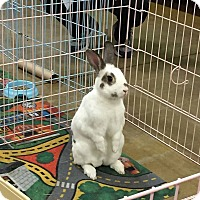 Adopt A Pet :: Friday - Williston, FL