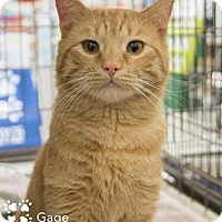 Adopt A Pet :: Gage - Merrifield, VA