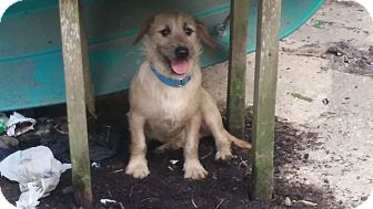 Terrier (Unknown Type, Medium)/Dachshund Mix Dog for adoption in Providence, Rhode Island - Abe
