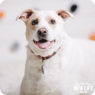 Labrador Retriever/Australian Cattle Dog Mix Dog for adoption in Portland, Oregon - Betsy