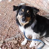 Adopt A Pet :: Shaggy - dewey, AZ