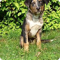 Adopt A Pet :: Sebastian - Hartford, CT