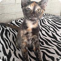 Adopt A Pet :: Eevee - Houston, TX