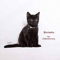 Adopt A Pet :: Nocturna - Riverside, CA
