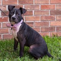 Adopt A Pet :: Manchester - Savannah, GA