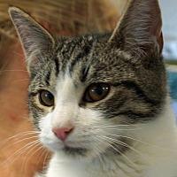 Adopt A Pet :: Betsy's Baby - Sprakers, NY