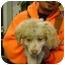Photo 2 - Spaniel (Unknown Type)/Siberian Husky Mix Puppy for adoption in Elwood, Illinois - Simon