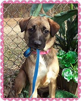 Collie/Hound (Unknown Type) Mix Dog for adoption in Marietta, Georgia - BEAR (R)