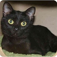 Adopt A Pet :: Raisin - Dallas, TX