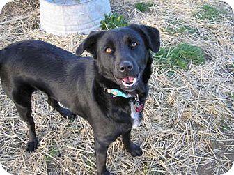 Labrador Retriever Mix Dog for adoption in Reedsport, Oregon - Miki
