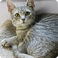 Adopt A Pet :: Kaylee - Medina, OH