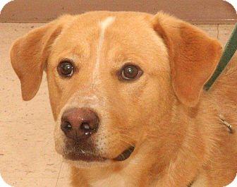 Retriever (Unknown Type) Mix Dog for adoption in McDonough, Georgia - Parsley