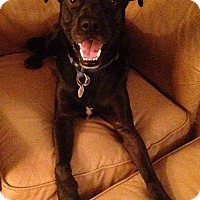 Adopt A Pet :: Baxter - Woodstock, ON
