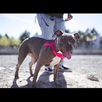Adopt A Pet :: Blueberry - Las Vegas, NV