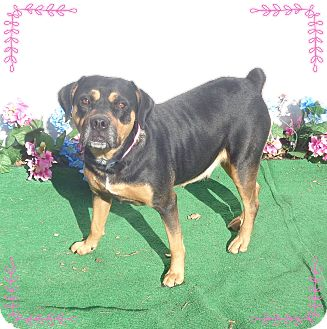 Rottweiler Mix Dog for adoption in Marietta, Georgia - BELLE & BEAUTY