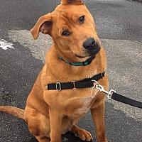 Adopt A Pet :: Tyrus - Rochester, MN