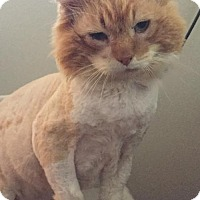 Adopt A Pet :: Potato - Denver, CO