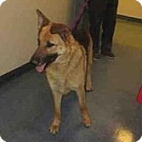 Adopt A Pet :: Macy - Santa Barbara, CA