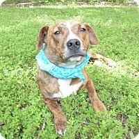 Corgi Mix Dog for adoption in Mocksville, North Carolina - Rhiana