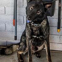 Adopt A Pet :: Huntley - Phoenix, AZ