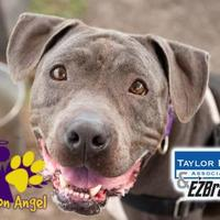 Mixed Breed (Large) Mix Dog for adoption in Georgetown, Texas - Legolas