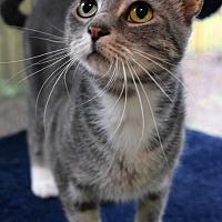 Adopt A Pet :: Margie - Mount Pleasant, SC