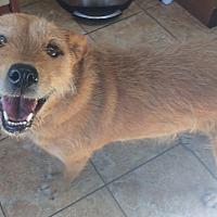Adopt A Pet :: Buttercup - Oak Ridge, NJ