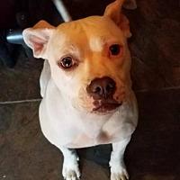 Adopt A Pet :: Sierra - Los Banos, CA