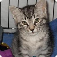 Adopt A Pet :: Joelle - Milwaukee, WI