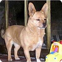 Adopt A Pet :: Babe - Scottsdale, AZ