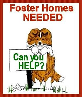 Sheltie, Shetland Sheepdog Dog for adoption in Pittsburgh, Pennsylvania - Foster Homes Needed