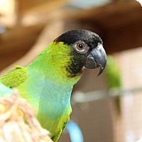 Adopt A Pet :: Cathy - Burleson, TX