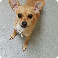 Adopt A Pet :: Cutie - Garwood, NJ