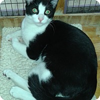 Adopt A Pet :: Damir - Whittier, CA