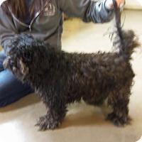 Adopt A Pet :: BRAVO - Medford, WI